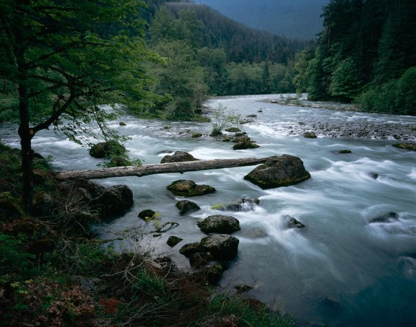 http://www.nps.gov/olym/naturescience/images/Elwha-River-log-Scott-Church-copy.jpg