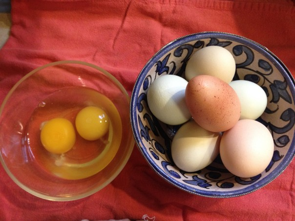 Free Range Chicken Eggs, multicolored and cracked open, this is the color you want your yokes to be