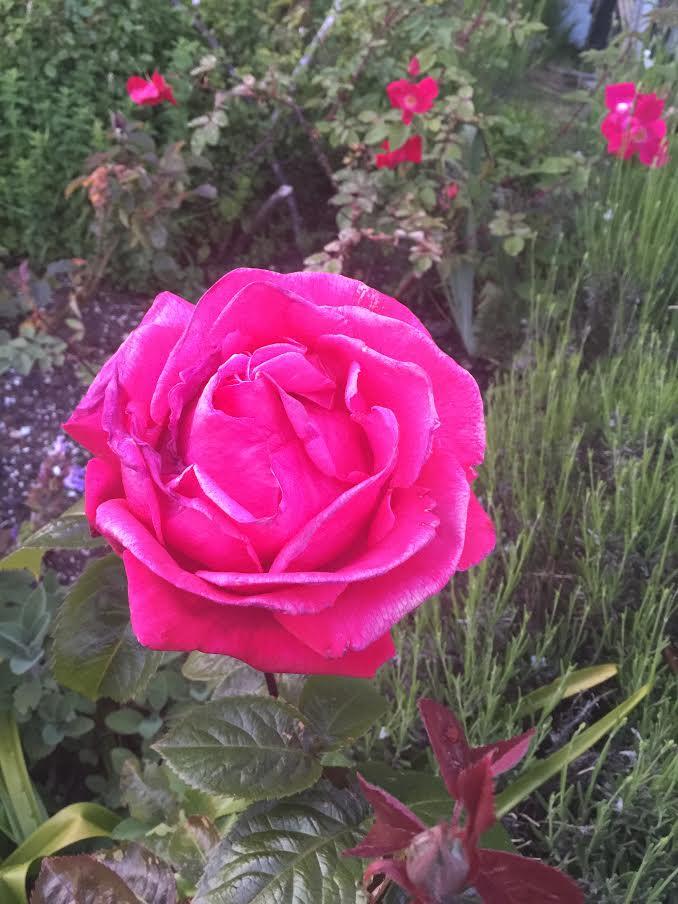 May Rose from Theresa May